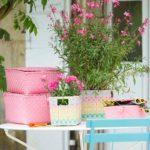 Ko-rbchen-Sunny-Klappschachtel-pink.jpg